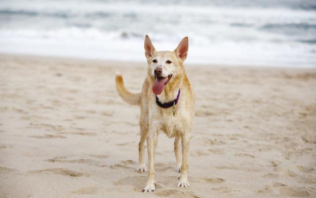 Sylvania Vet Keeping Pets Cool in Summer